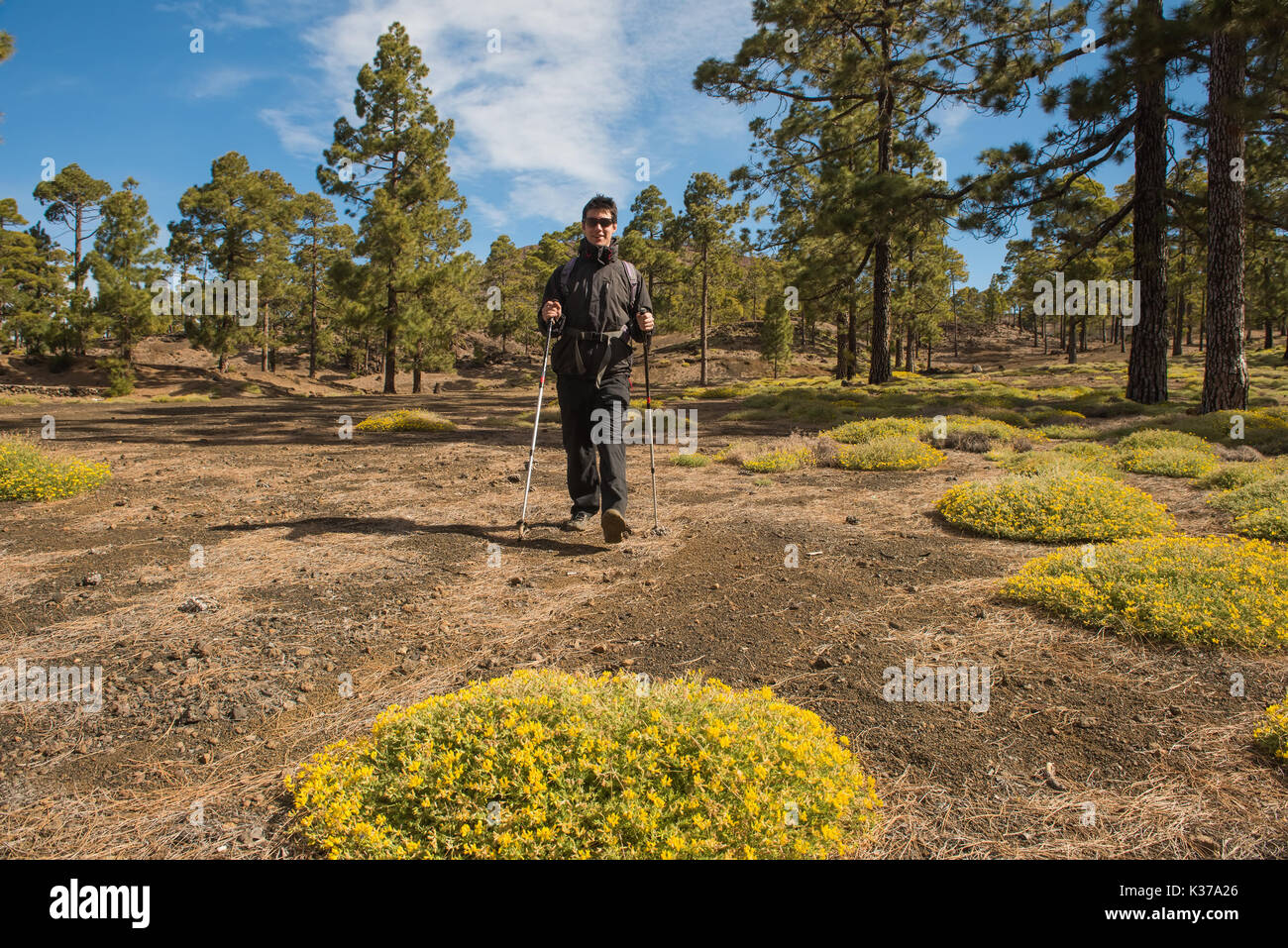 Hiker man hiking in forest Tenefire, Canary - Stock Image