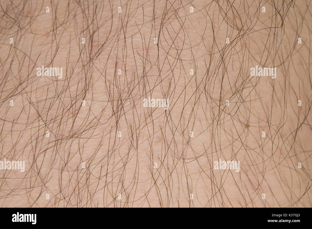 real human skin with hair texture background. - Stock Image