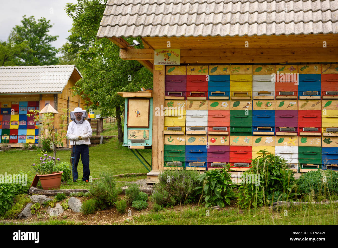 Local beekeeper Blaz Ambrozic with colorful traditionally painted apiary beehive houses at Kralov Med in Selo near Bled Slovenia in Spring - Stock Image