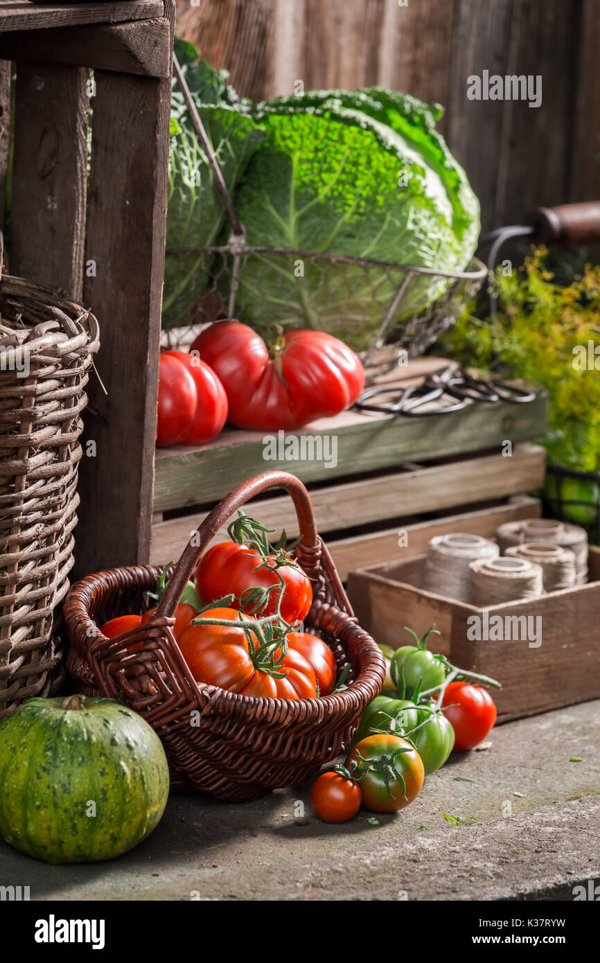 Vintage pantry full of supplies for the winter - Stock Image