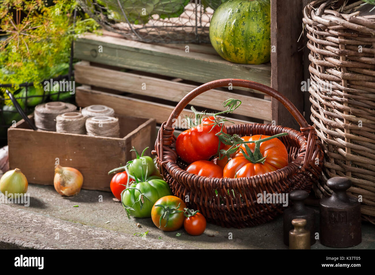 Vintage basement with harvested vegetables and fruits - Stock Image