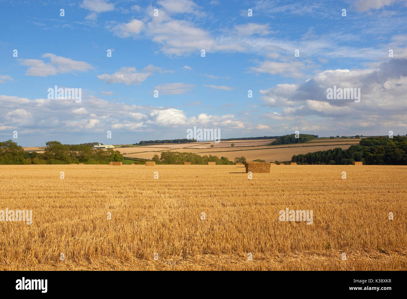 Square Straw Bales In A Harvested Wheat Field With Hills