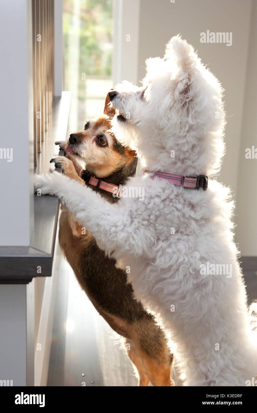 Barking Dogs Stock Photos Amp Barking Dogs Stock Images Alamy
