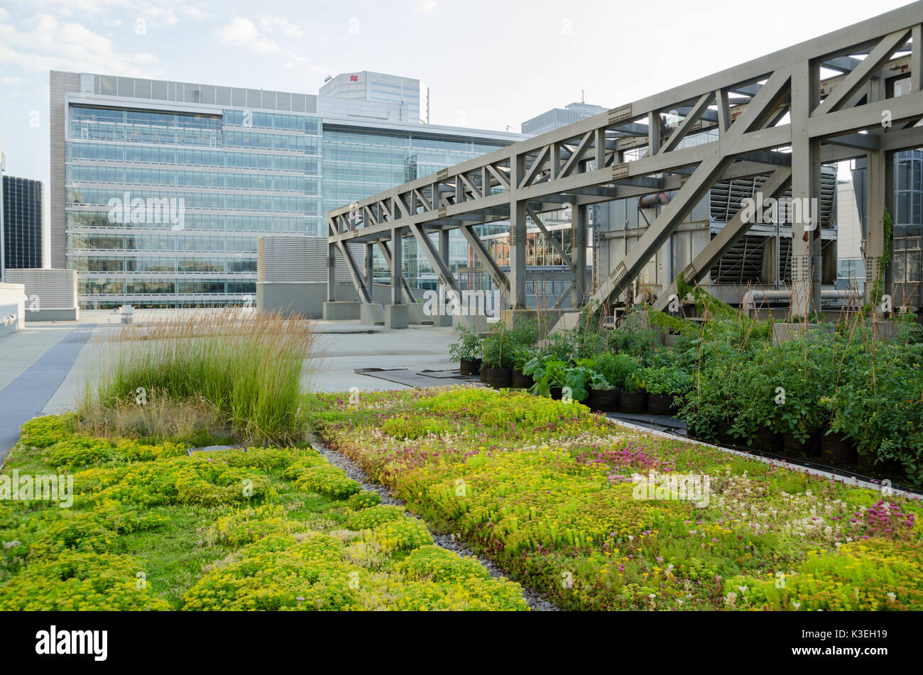 Rooftop Garden on the roof of Montreal Palais des Congres - Stock Image