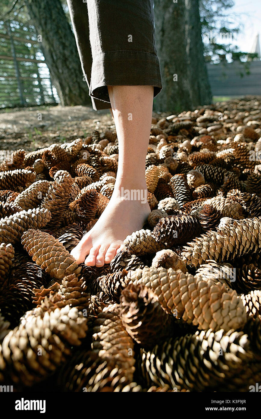 Barefooted walking on fir cone - Stock Image