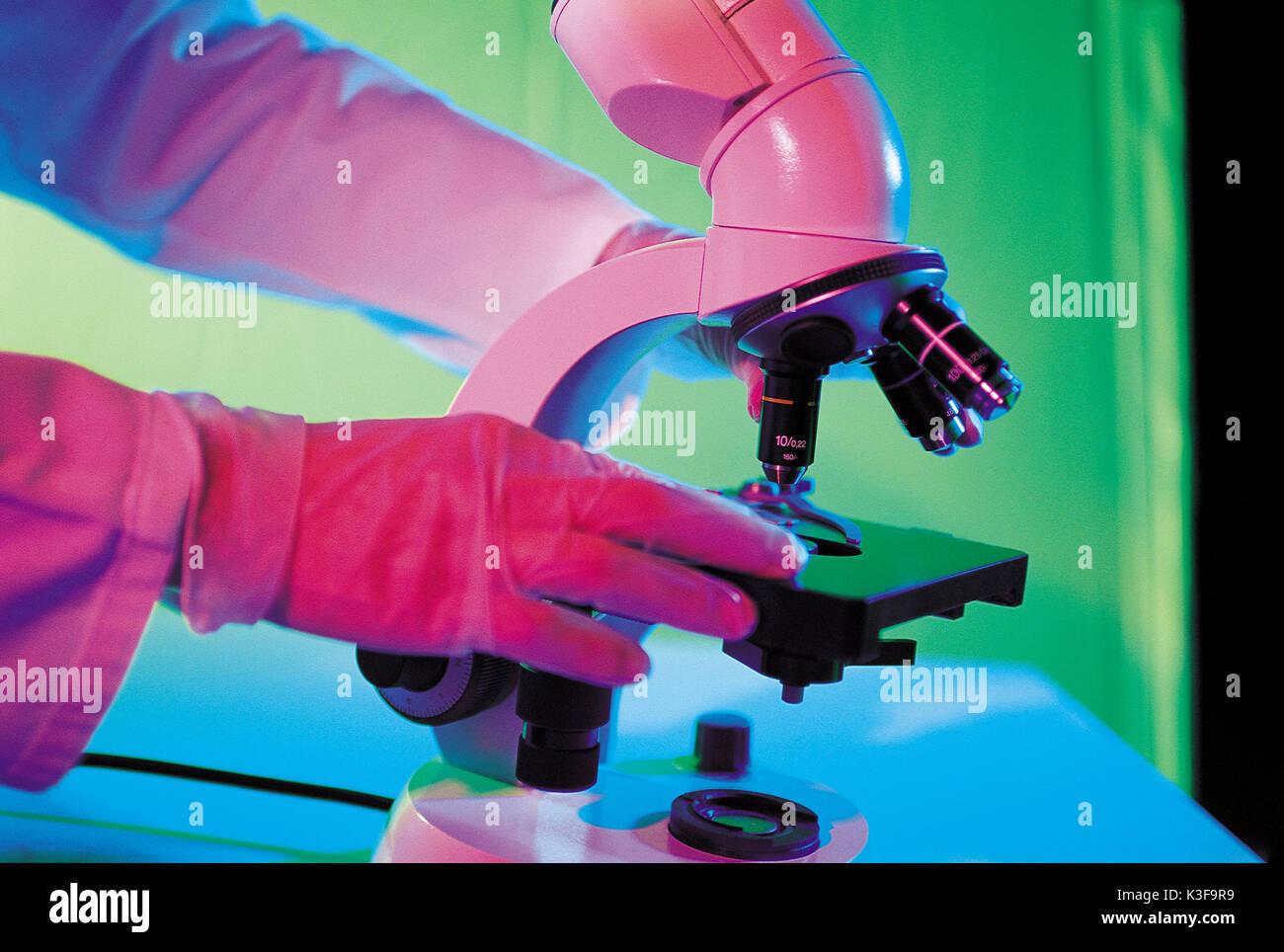study under the microscope - Stock Image
