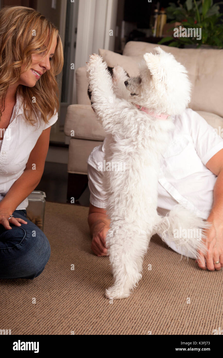 woman training her dog . couple trains their dogs at home - Stock Image