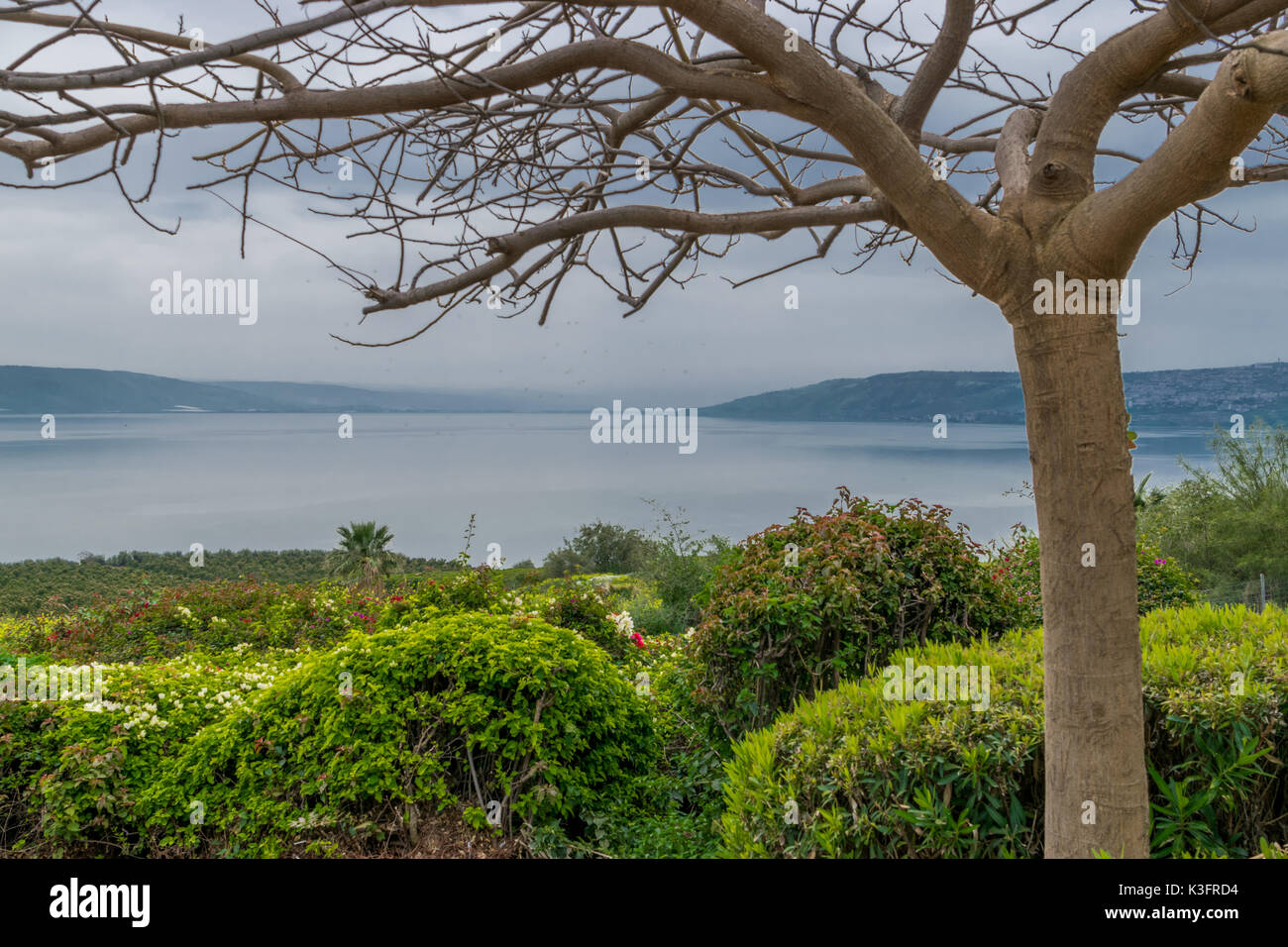 Lake of Galilee behind the tree Stock Photo