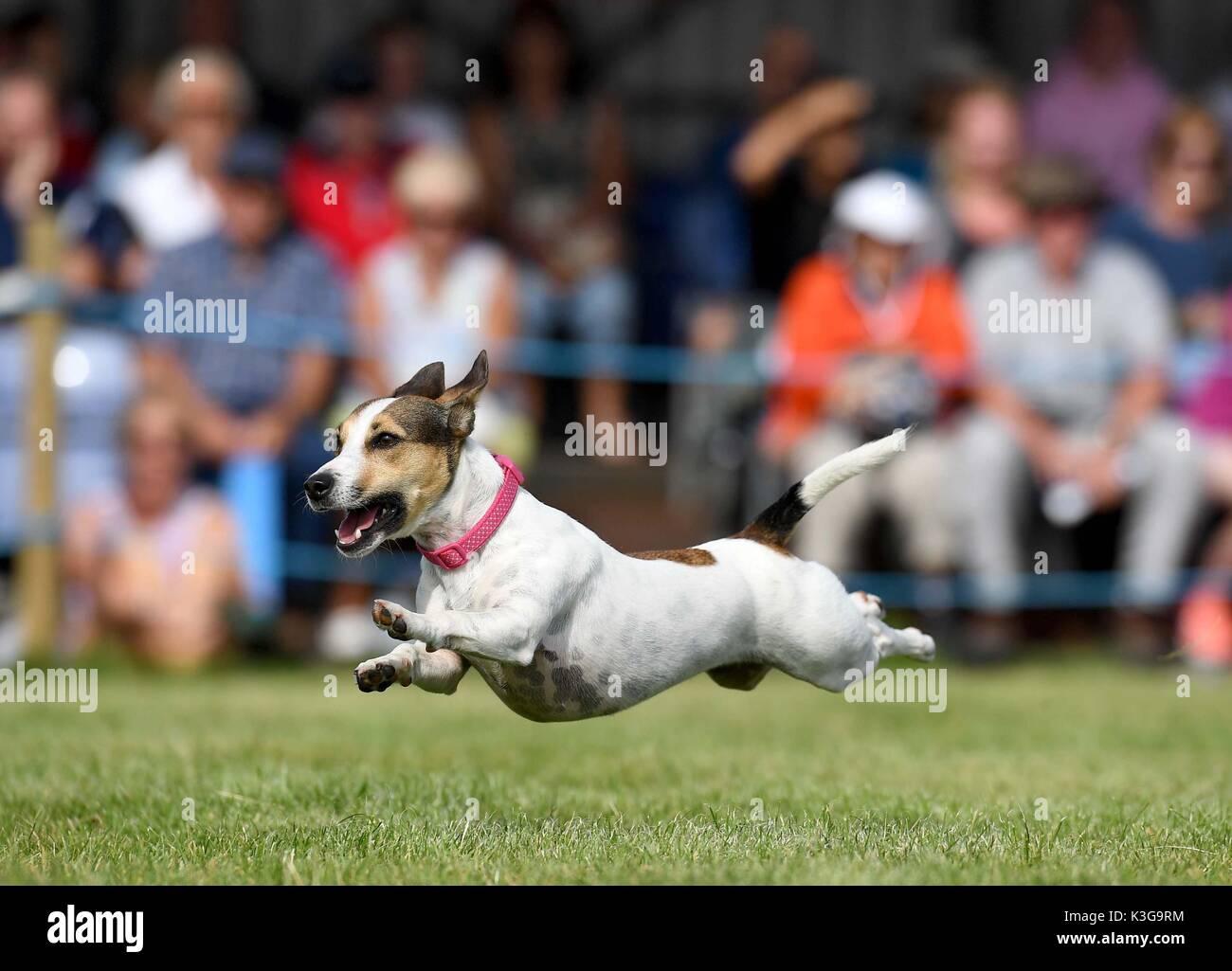 Dog Show In Dorset June