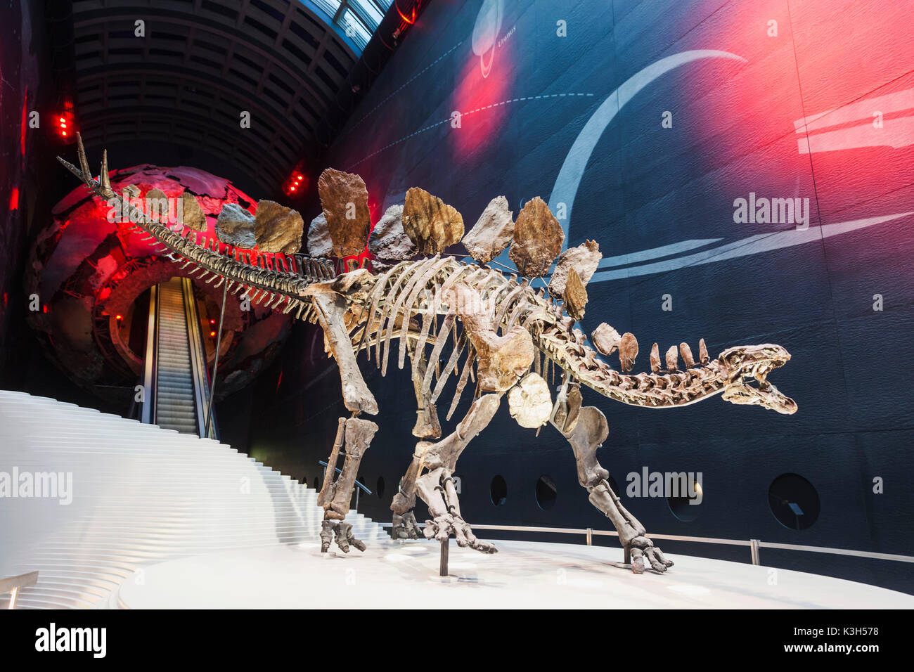 England, London, Kensington, Natural History Museum, Skeleton of a Stegosaurus Dinosaur - Stock Image