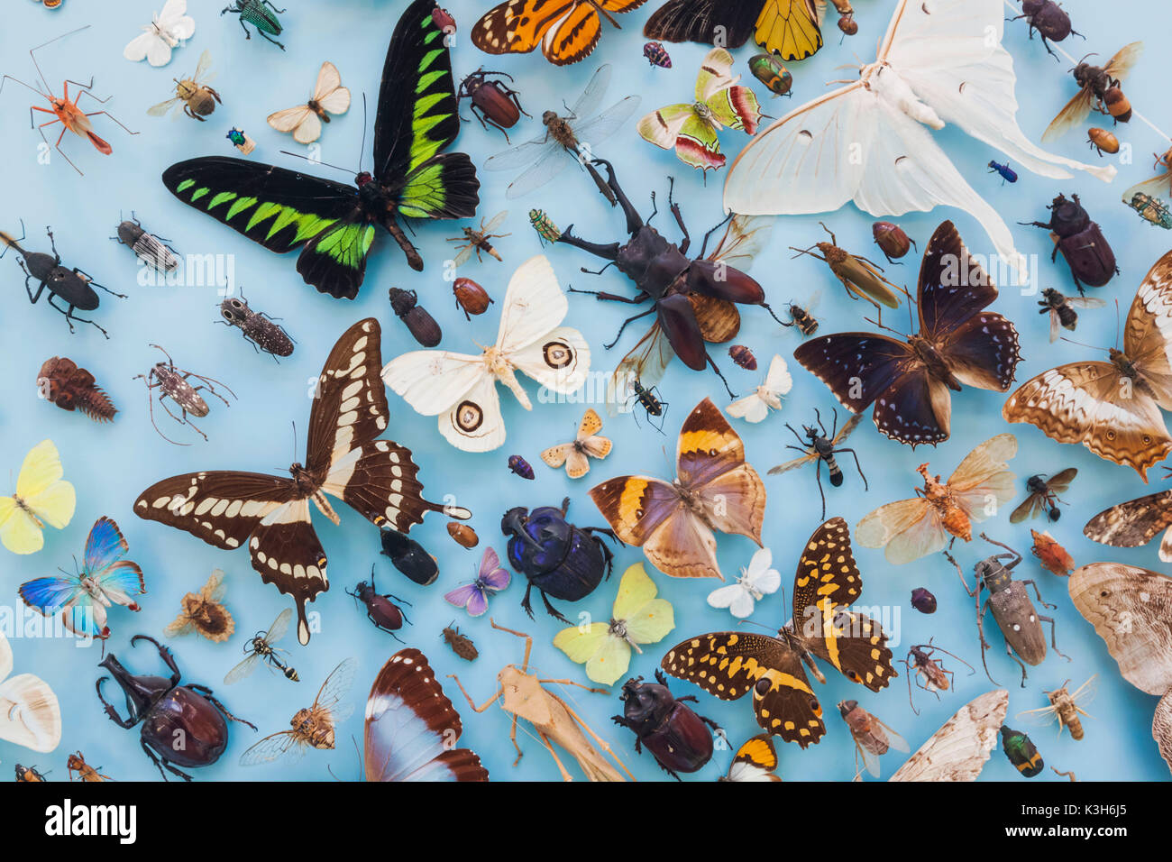 England, Oxfordshire, Oxford, Museum of Natural History, Display of Insects and Butterflies - Stock Image