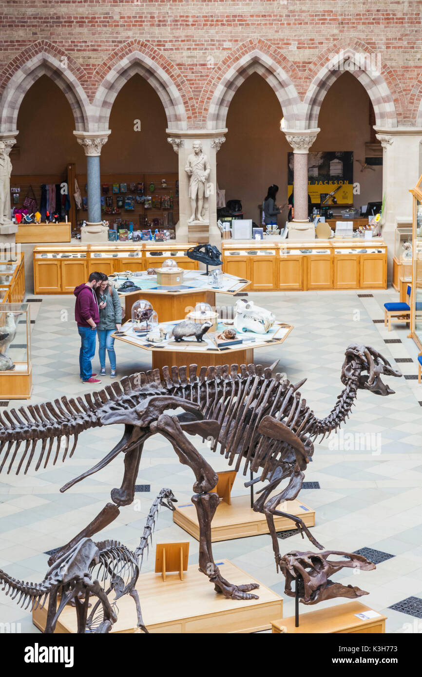 England, Oxfordshire, Oxford, Museum of Natural History, Interior View - Stock Image