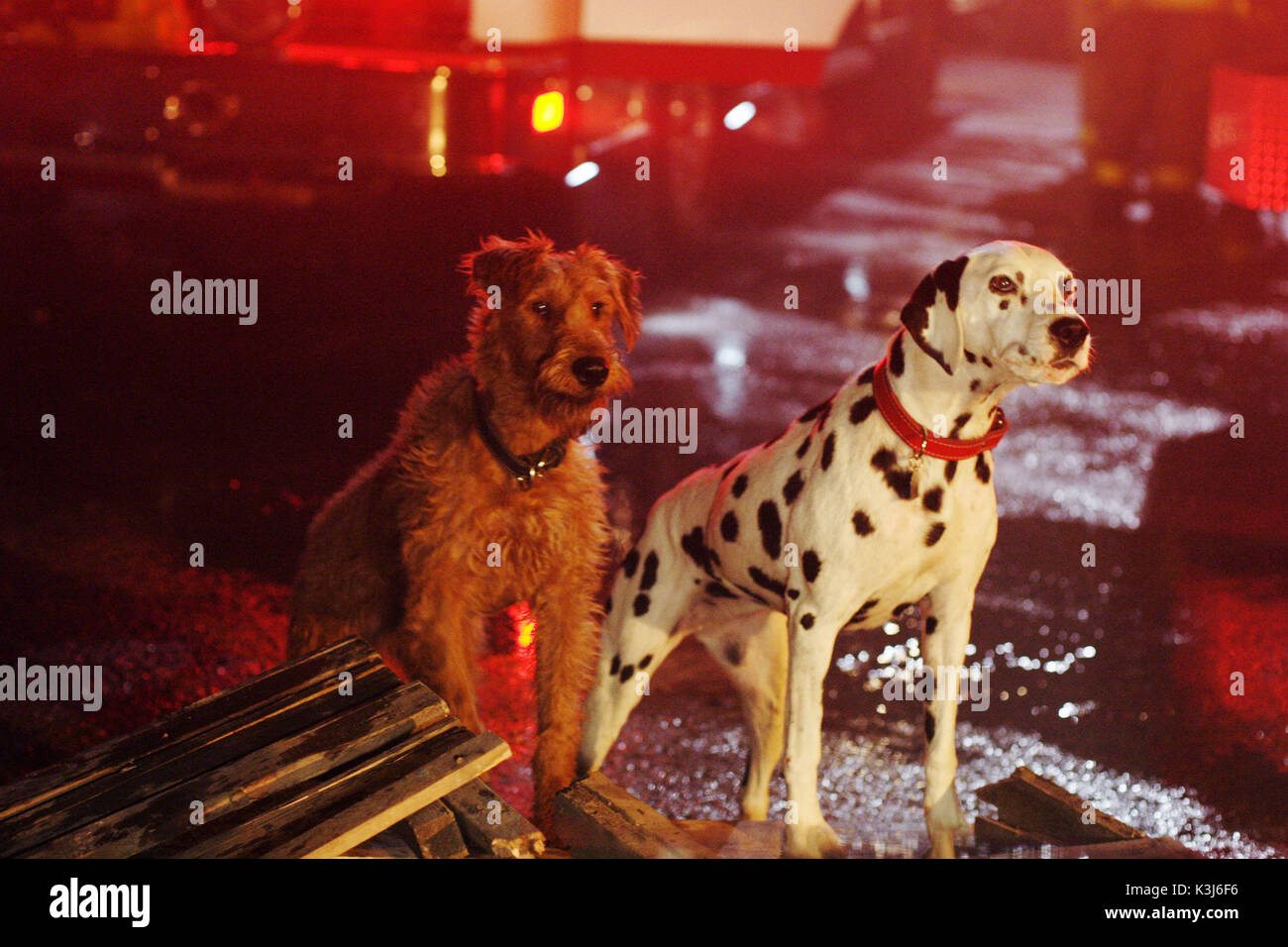 Firehouse Dog For Further Information Please Contact Your Local Twentieth Century Fox Press Office FIREHOUSE