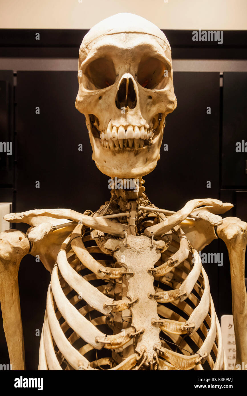 Japan, Hoshu, Tokyo, Ueno Park, National Museum of Nature and Science, Exhibit of Skeletons of Jomon People - Stock Image