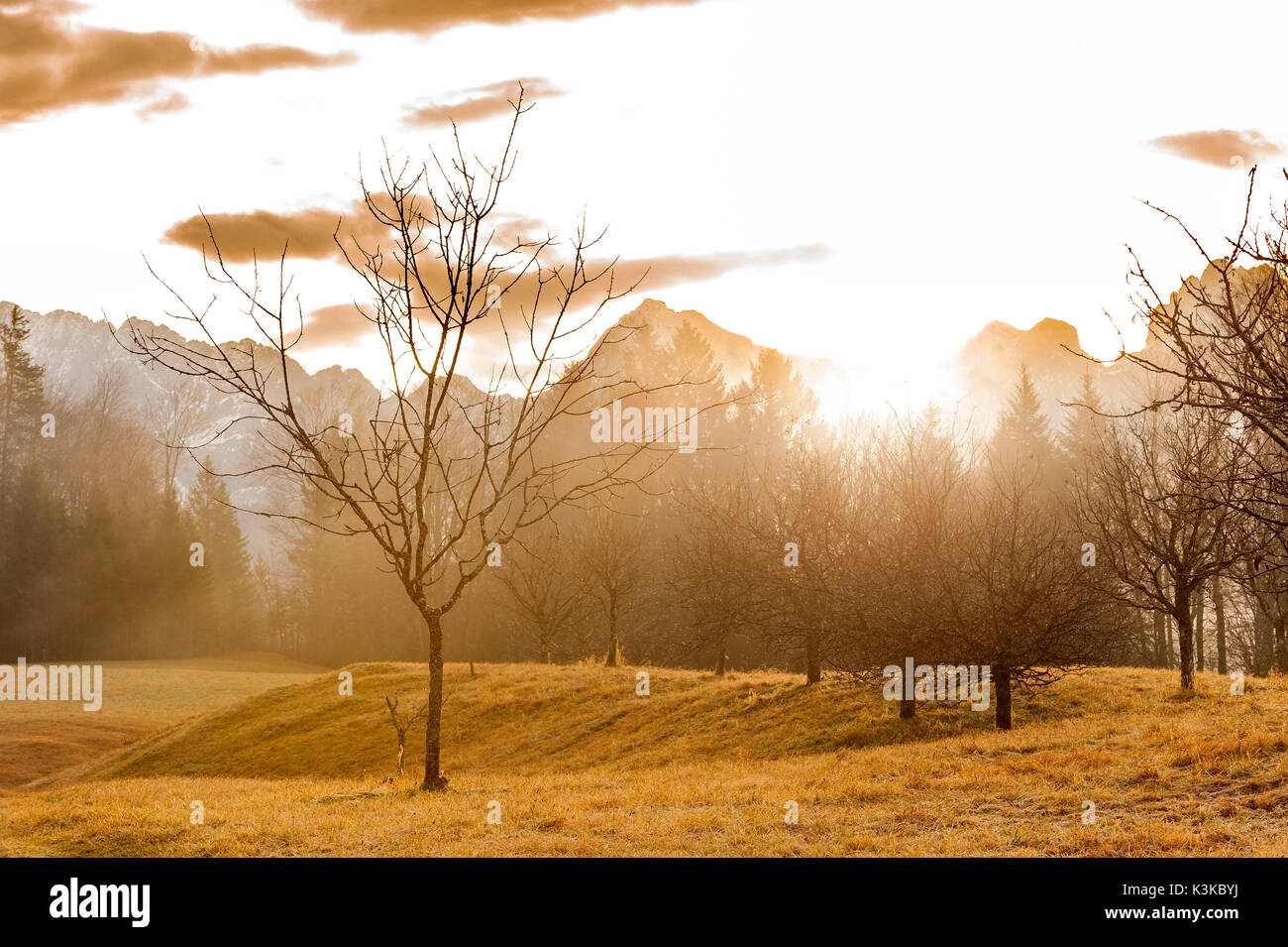 Single tree of an orchard meadow in the violent back light of the sundown about the Karwendelgebirge (mountains) with fog. - Stock Image