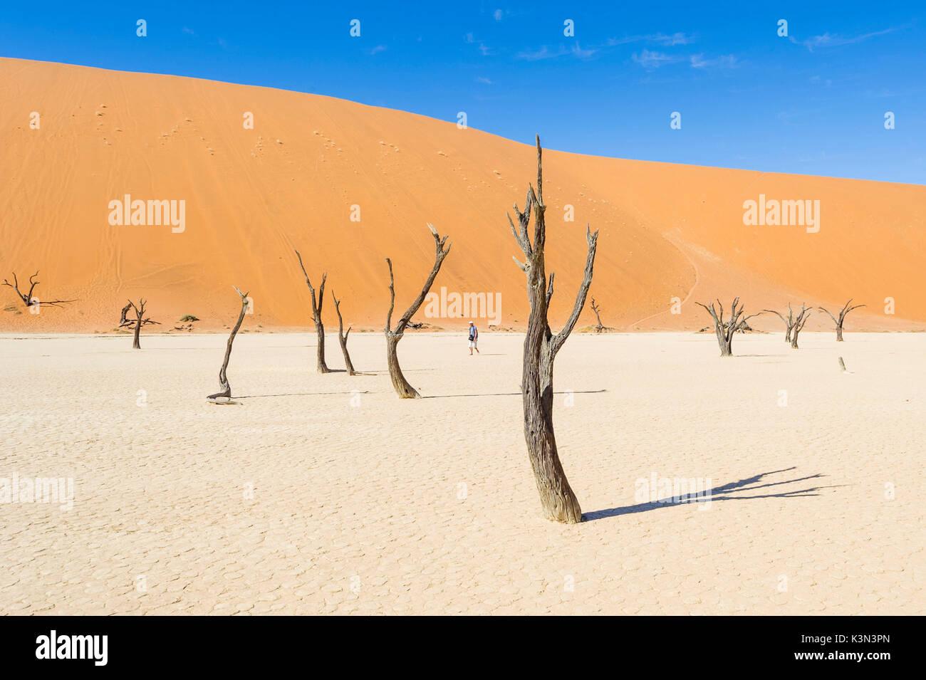 Deadvlei, Namib-Naukluft National Park, Namibia, Africa. Man walking into the dead acacias salt pan. - Stock Image