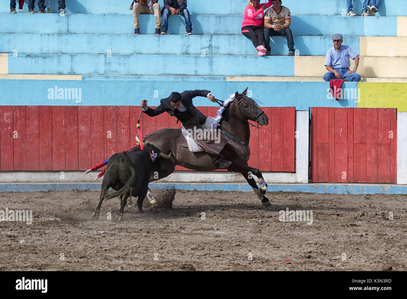 June 18, 2017, Pujili, Ecuador: a bullfighter riding his horse in the arena leaning towards the bull and stabbing with harpoon - Stock Image