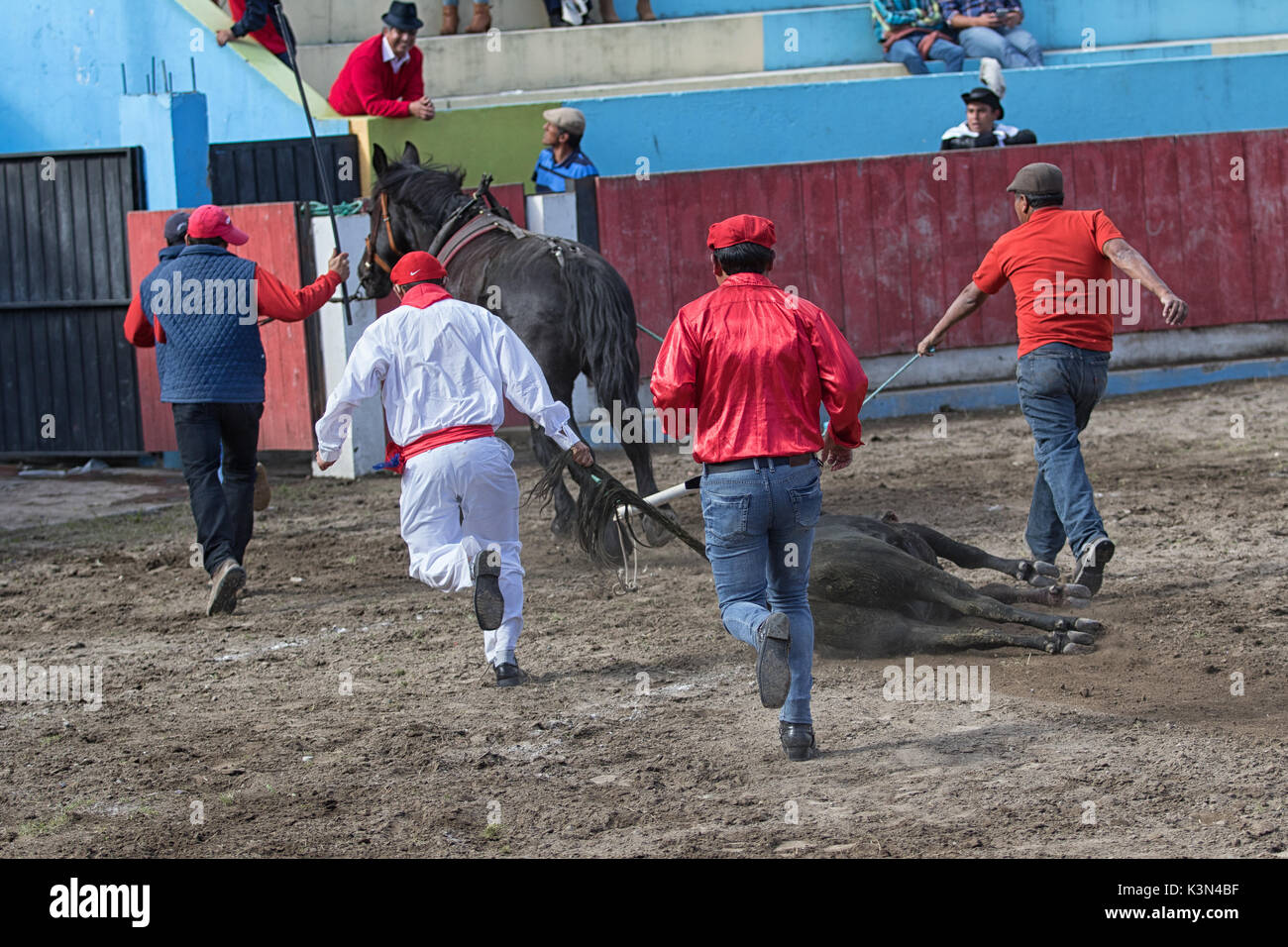 June 18, 2017 Pujili, Ecuador: the sacrificed bull is pulled out from the ring by horse after the ritual Stock Photo