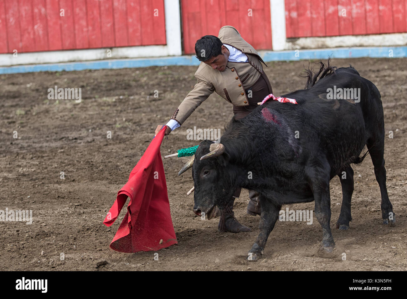 June 18, 2017 Pujili, Ecuador: bullfighter holds up a cape in front of the bull during the ritual - Stock Image