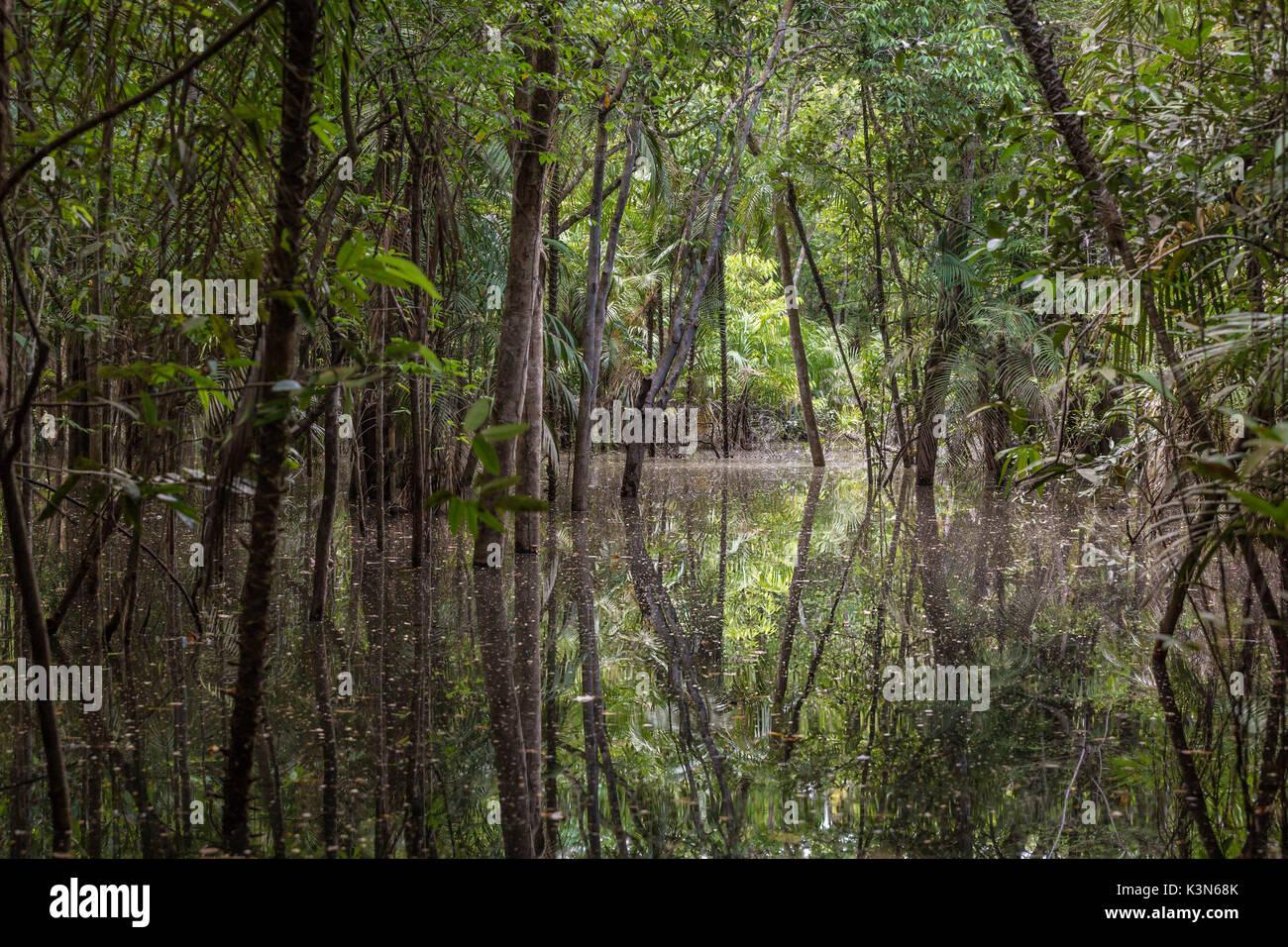 The flooded forest of the Rio negro Basin depicted in early August when the water level is still high and floods large area of the primary forest. Amazonas; Amazonia; Manaus; Brazil. - Stock Image
