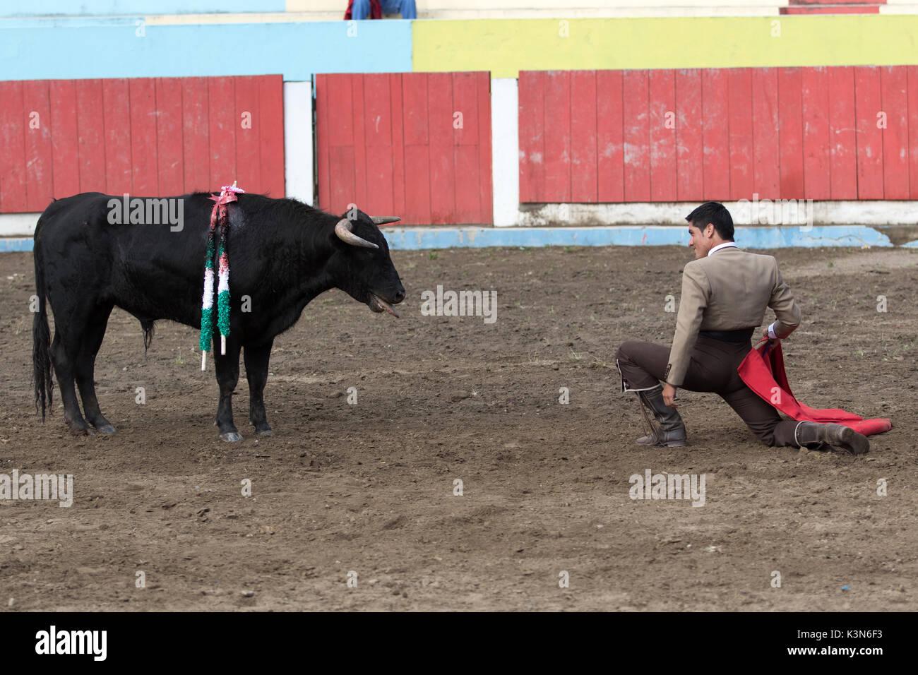 June 18, 2017 Pujili, Ecuador: bullfighter kneels in front of the bull during the ritual - Stock Image