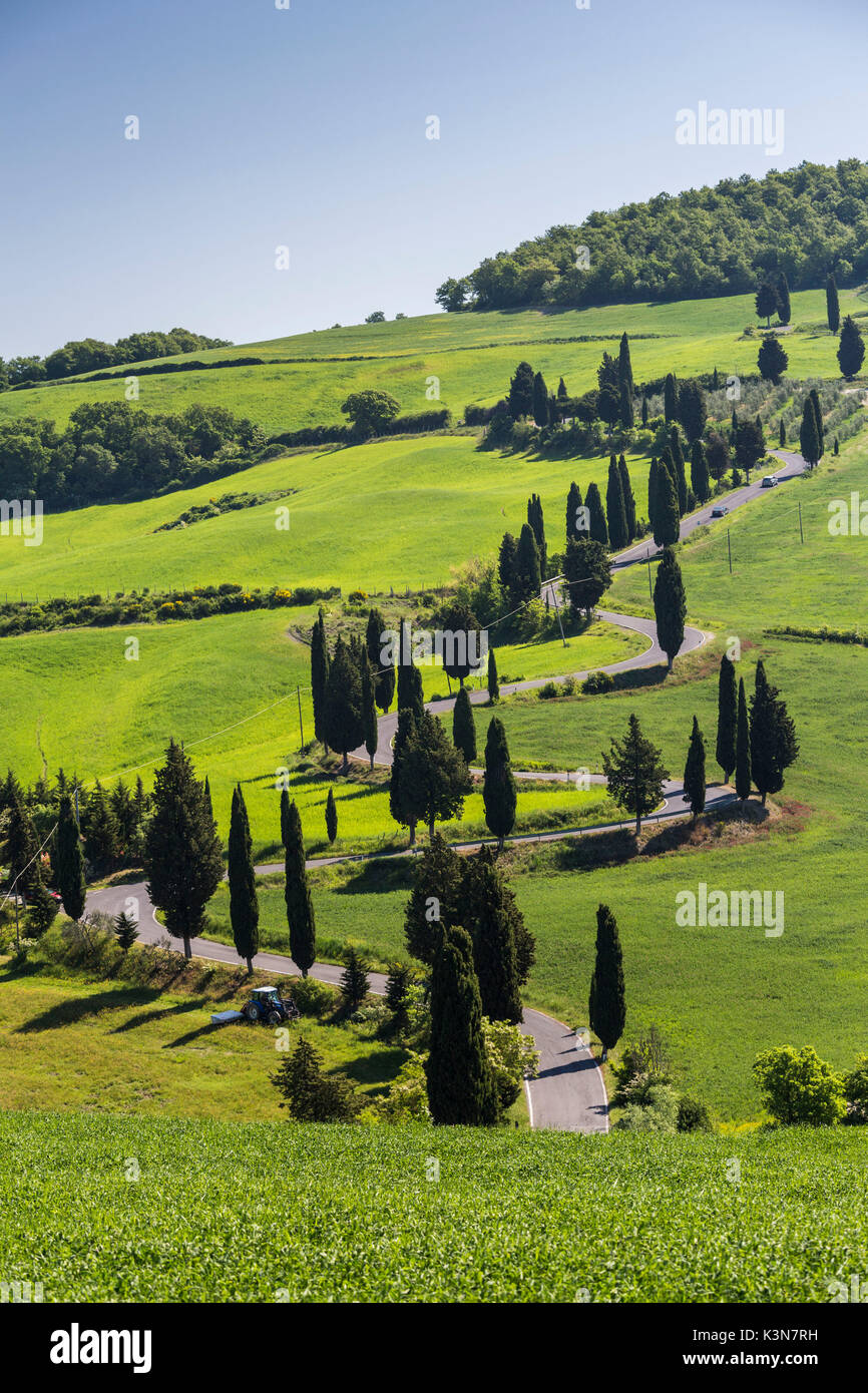 Road with cypresses. Orcia Valley, Siena district, Tuscany, Italy. Stock Photo