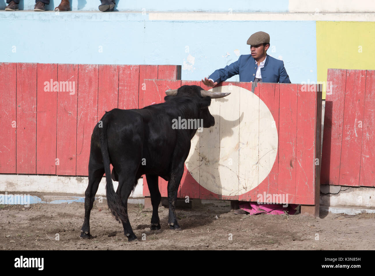 June 18, 2017 Pujili, Ecuador: picador behind protecting fence holds palm out towards the bull - Stock Image