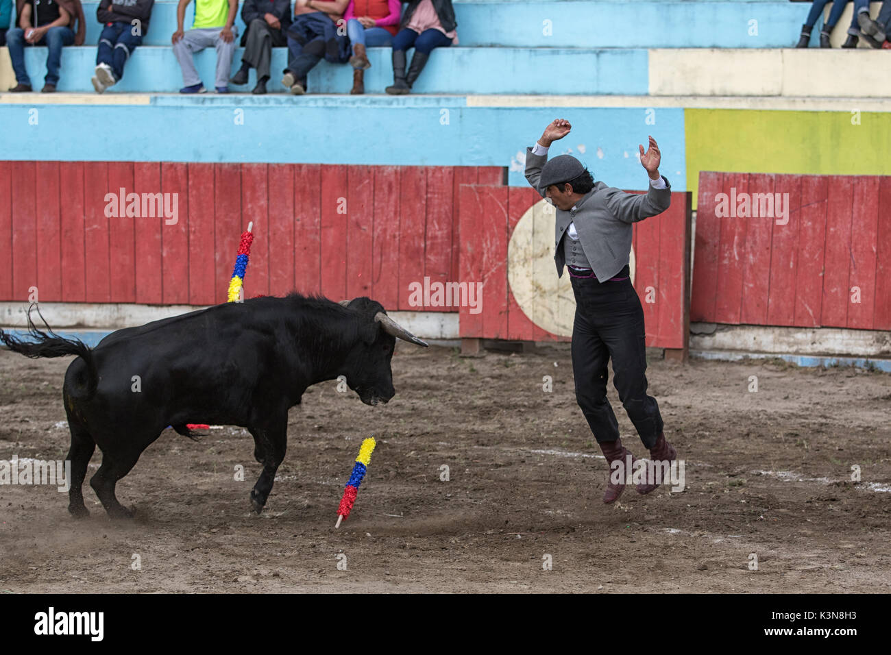 June 18, 2017 Pujili, Ecuador: picador jumps up in the front of the charging bull in the arena - Stock Image