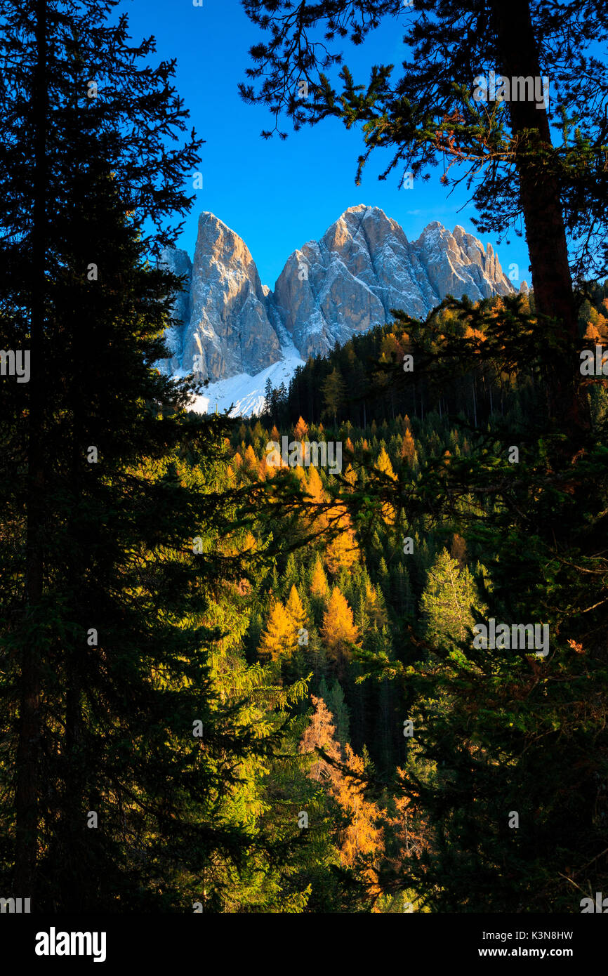 Odle in autumn, Dolomiti, alto adige, italy,europe - Stock Image