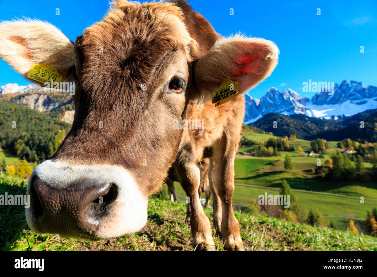 Odle in autumn, Dolomiti, alto adige, italy, europe Stock Photo