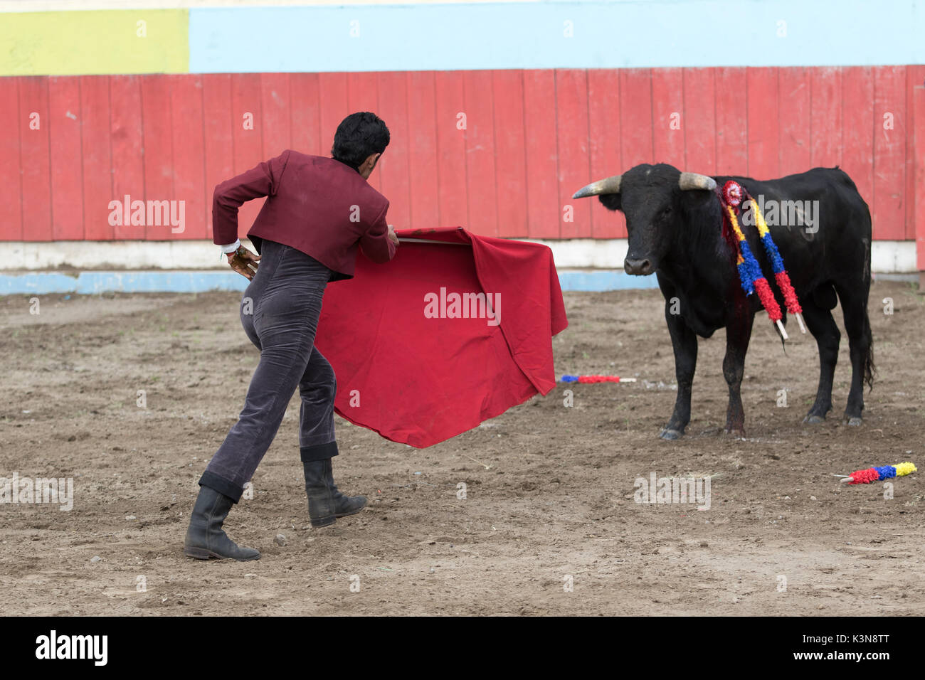 June 18, 2017 Pujili, Ecuador: bullfighter holds up a red cape in front of the bull in the arena - Stock Image