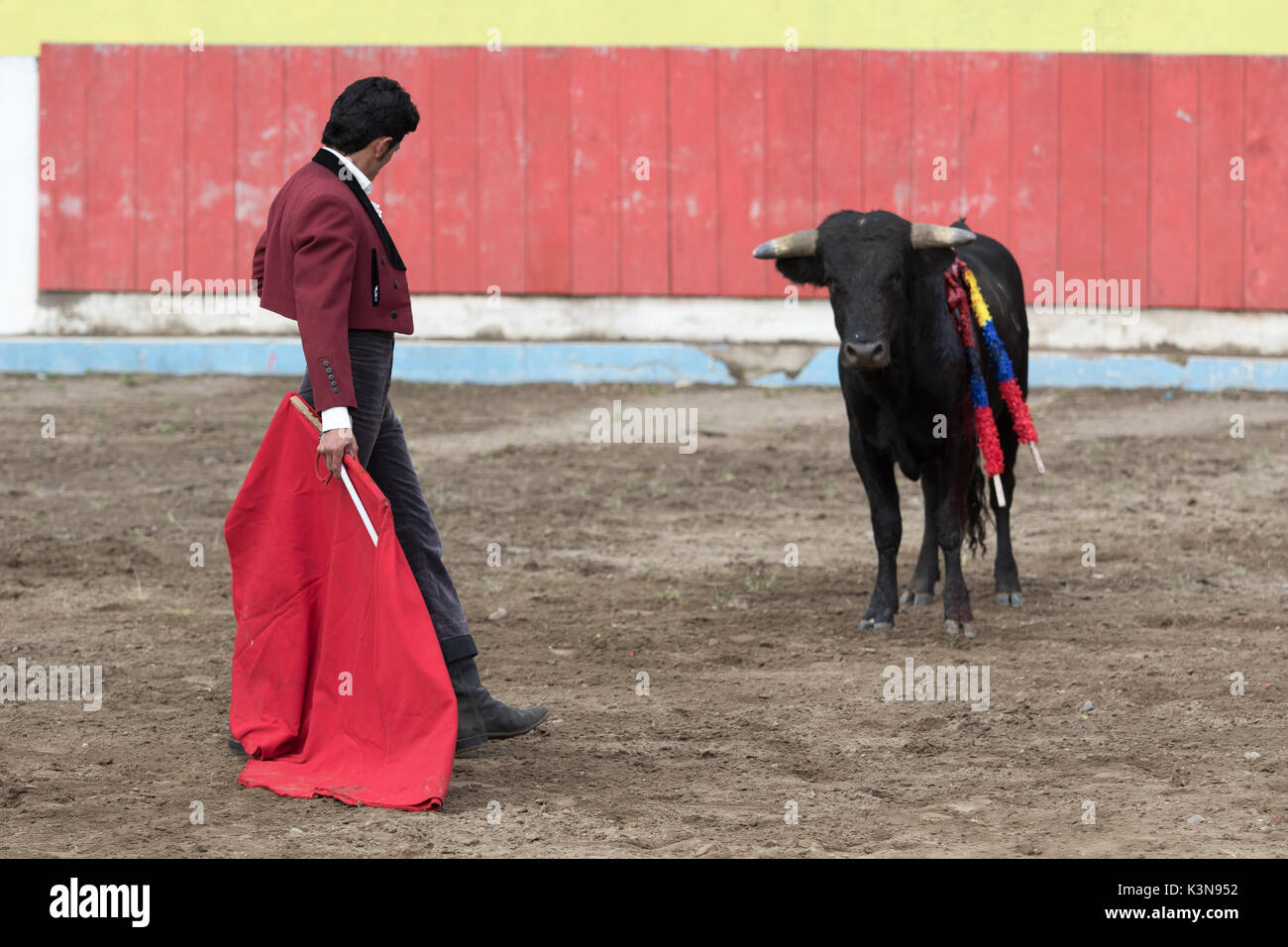 June 18, 2017 Pujili, Ecuador: bullfighter stnads in front of bull in a challenging way in the arena - Stock Image