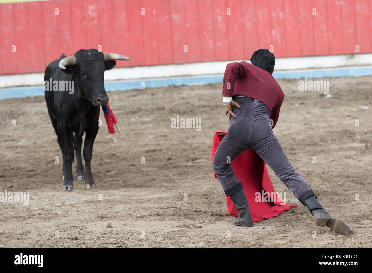 June 18, 2017 Pujili, Ecuador: bullfighter stands in front of bull in a challenging way in the arena - Stock Image