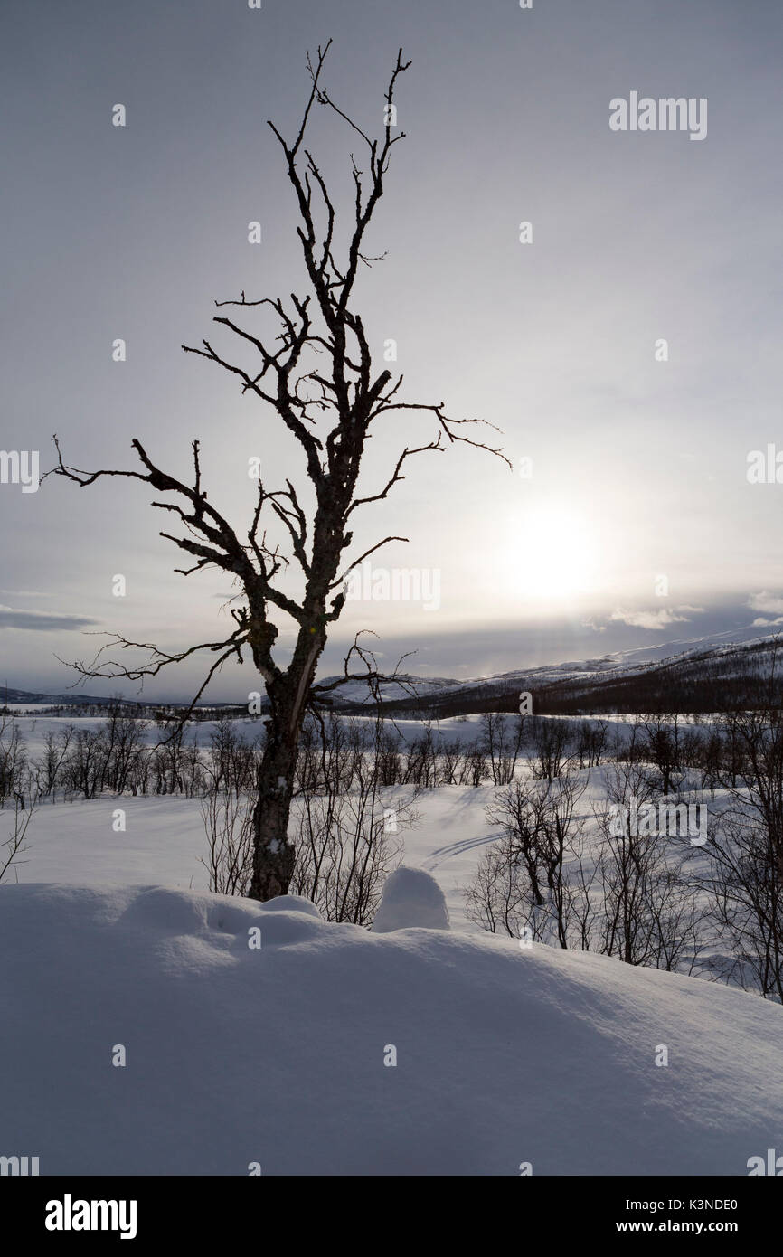 Morning light rising up over the snow covered land , Norway - Stock Image
