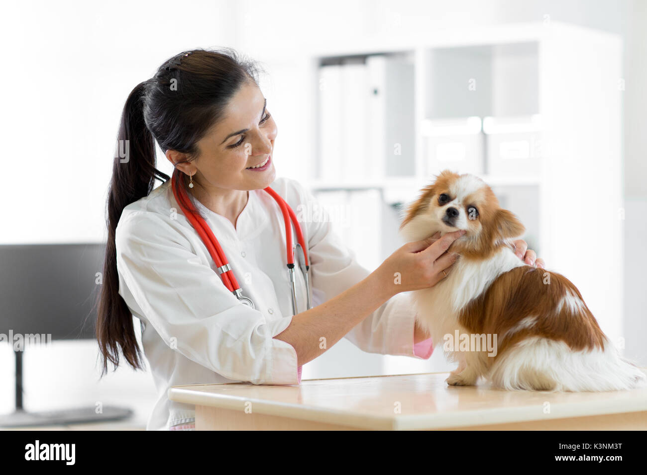 smiling Veterinarian with dog, on table in vet clinic - Stock Image