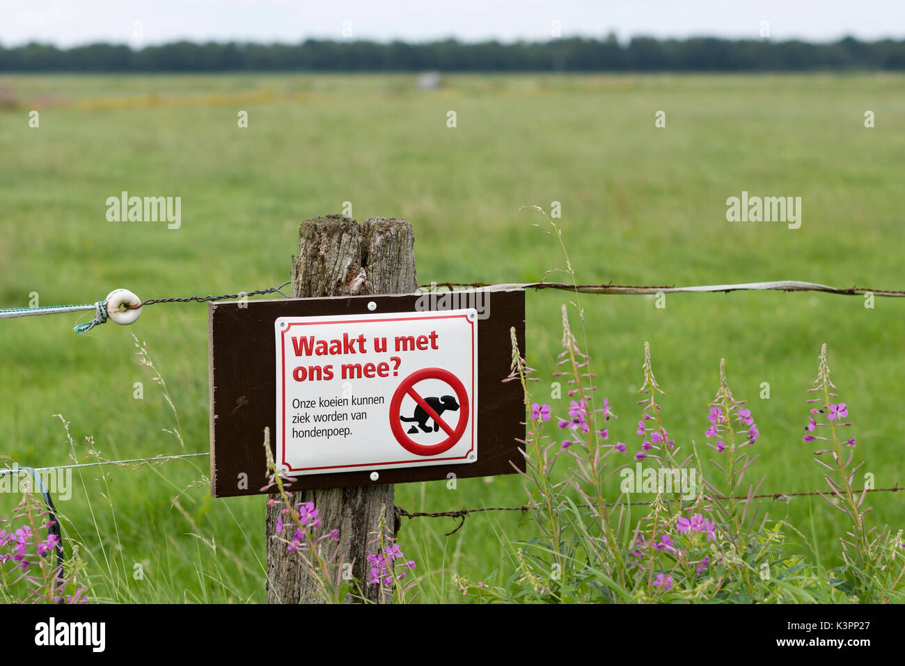 Join us watching? Sign against pathogenic dog poo near pasture for cows - Stock Image