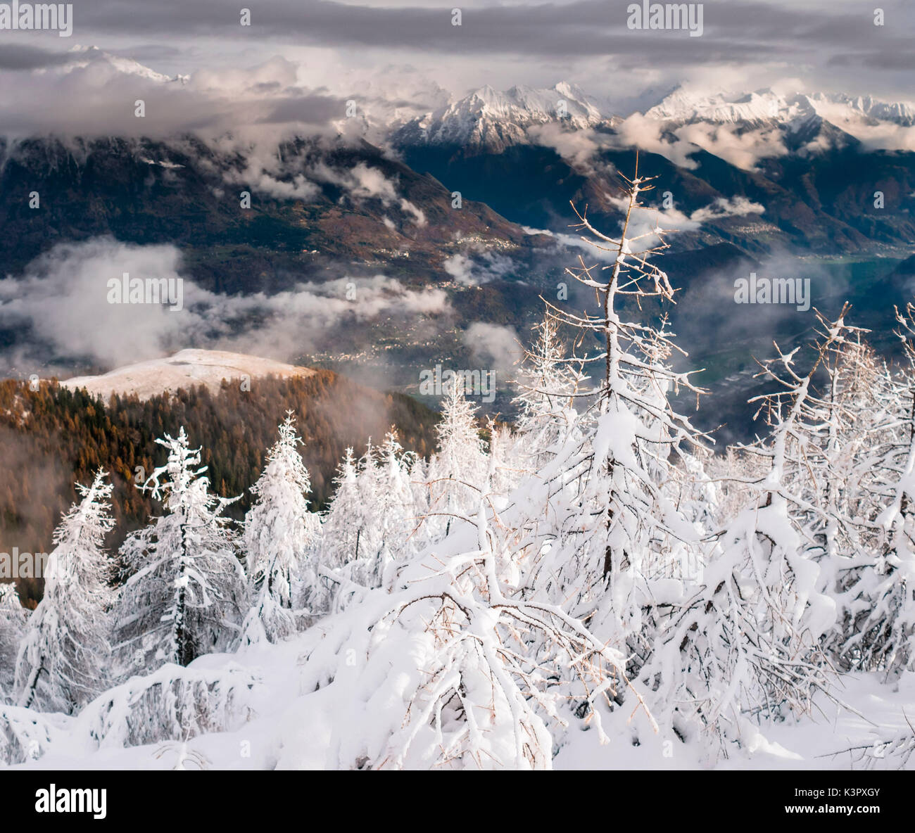 Severe contrasts between larchs filled with snow and the dark bottom of and alpine valley, Valtellina, Italy - Stock Image