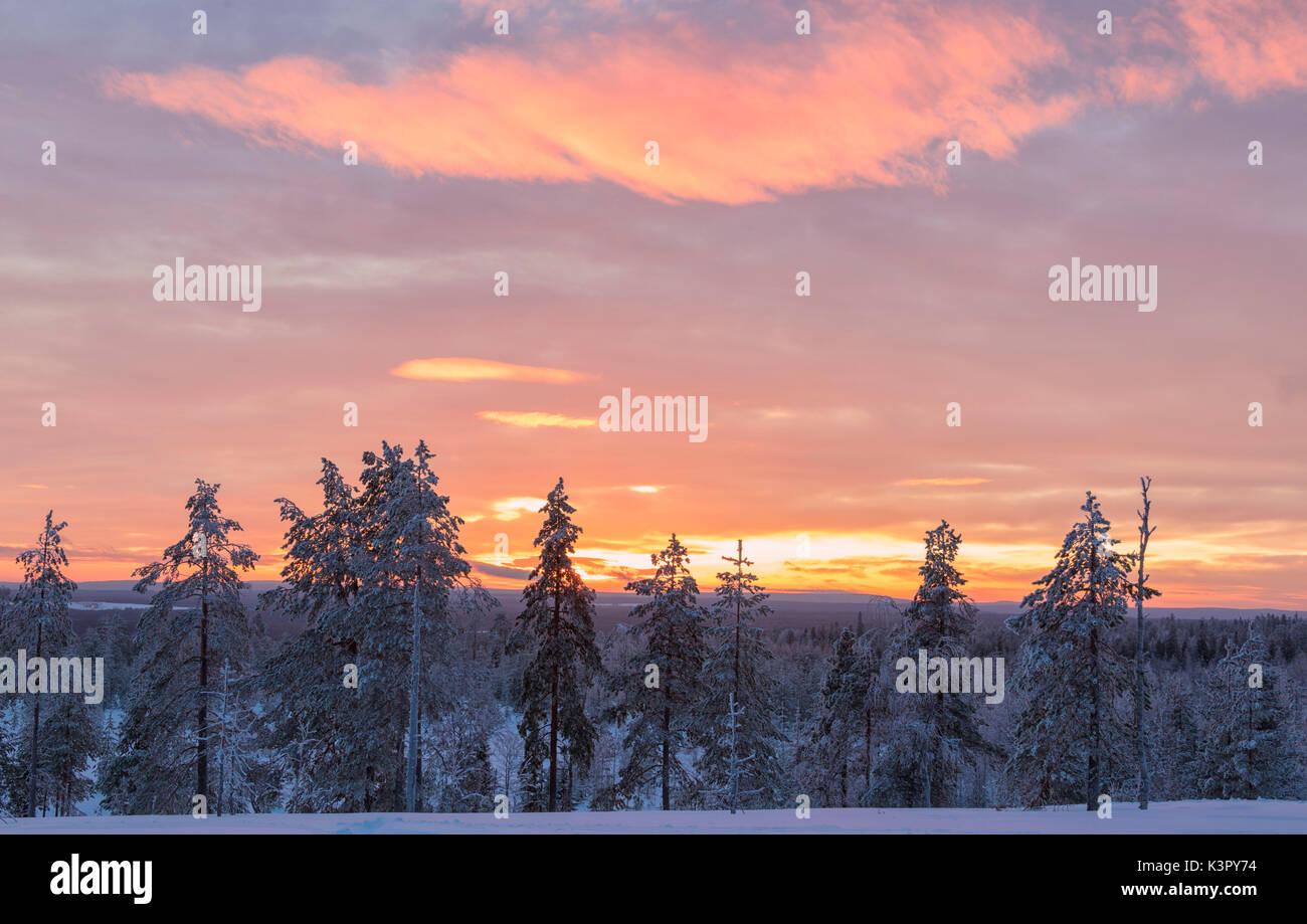 Pink lights of the arctic sunset illuminate the snowy woods Vennivaara Rovaniemi Lapland region Finland Europe - Stock Image