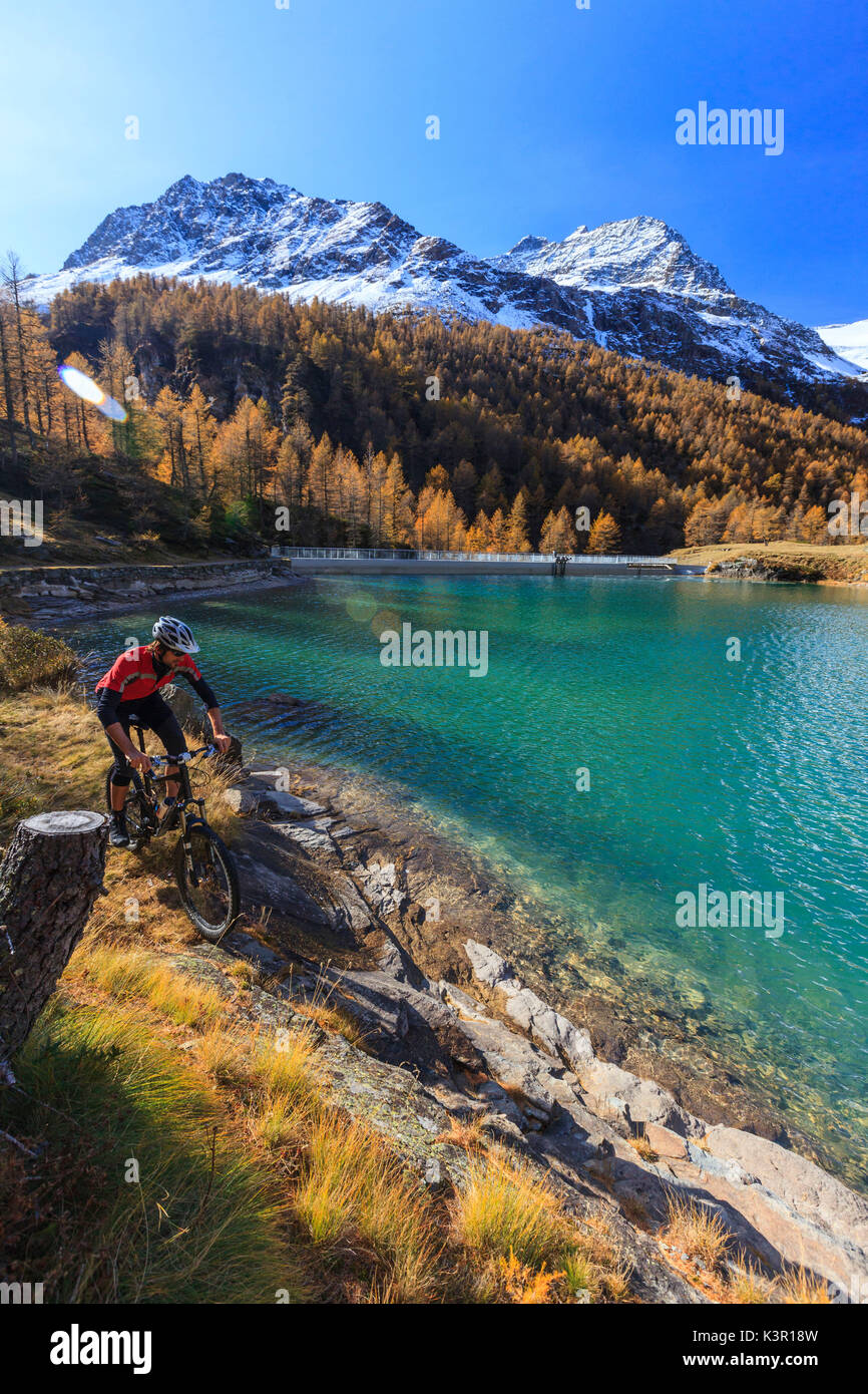 Biker along the banks of the hydroelectric reservoir of Alp Grum in autumn. Poschiavo Valley Canton of Graubünden Switzerland Europe - Stock Image