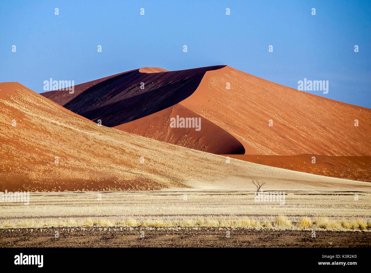 Dried plants among the sand dunes shaped by wind Deadvlei Sossusvlei Namib Desert Naukluft National Park Namibia Africa - Stock Image