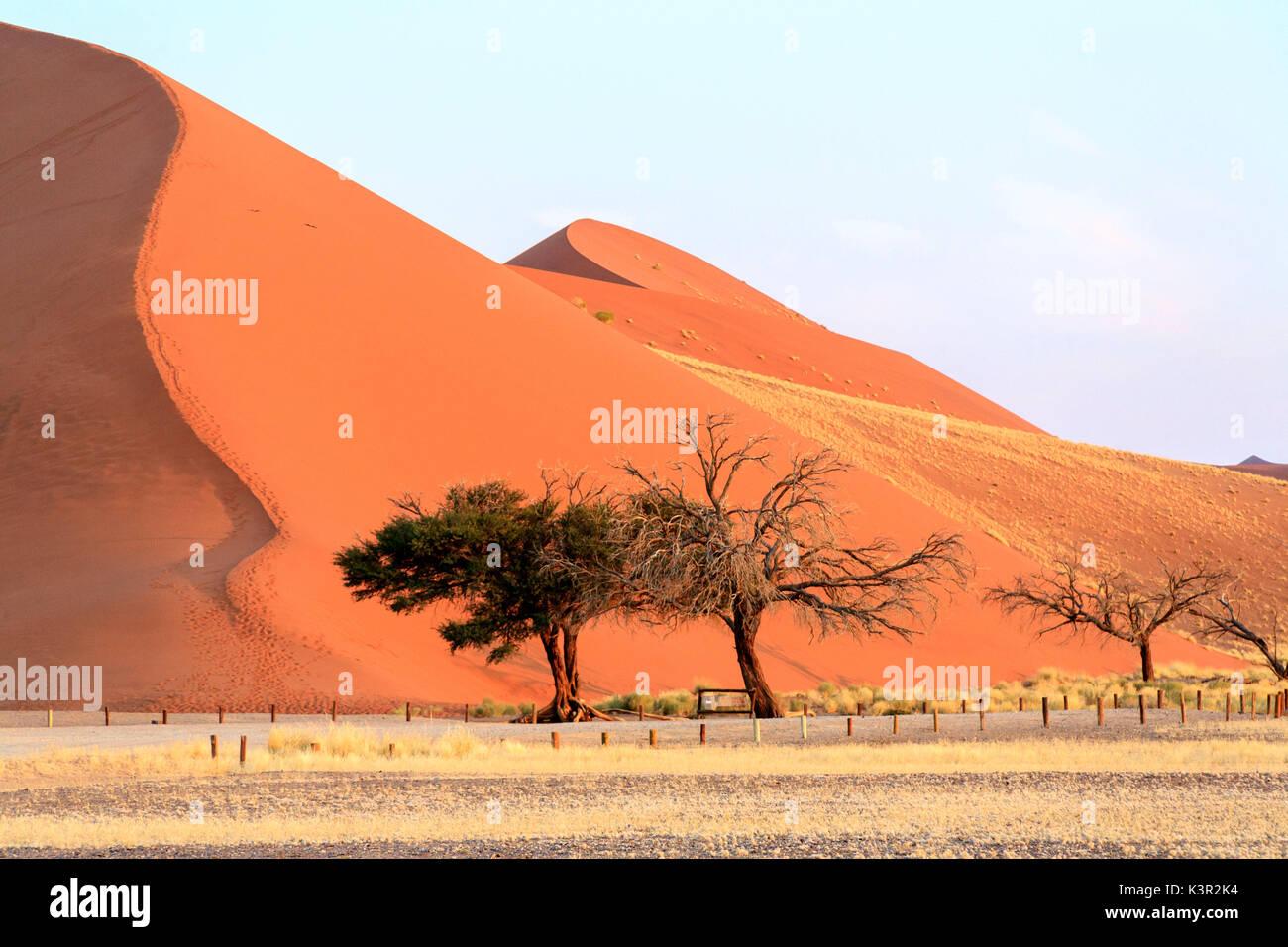 Dune 45 the star dune composed of 5 million year old sand Sossusvlei Namib Desert Naukluft National Park in Namibia Stock Photo