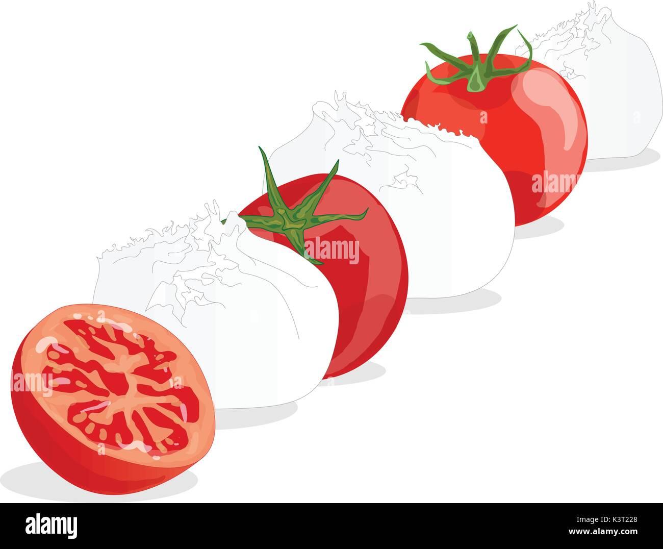 Piece of white mozzarella isolated. Illustration. - Stock Vector