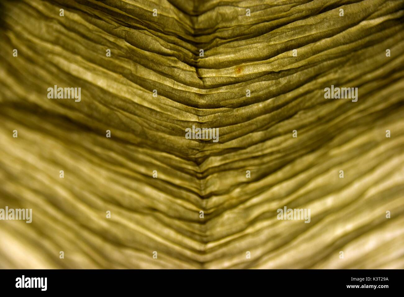 translucent lampshade, lampshades, lighted lampshade, opaque, directing the  light to a particular area, shielding Stock Photo