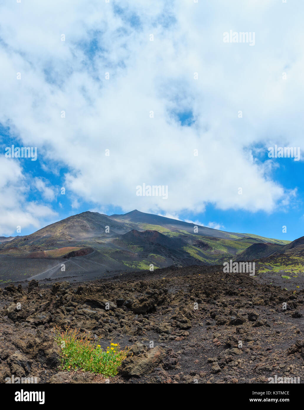 Yellow flowers on stony magma fields between summer Etna volcano mountain craters, Sicily, Italy. - Stock Image