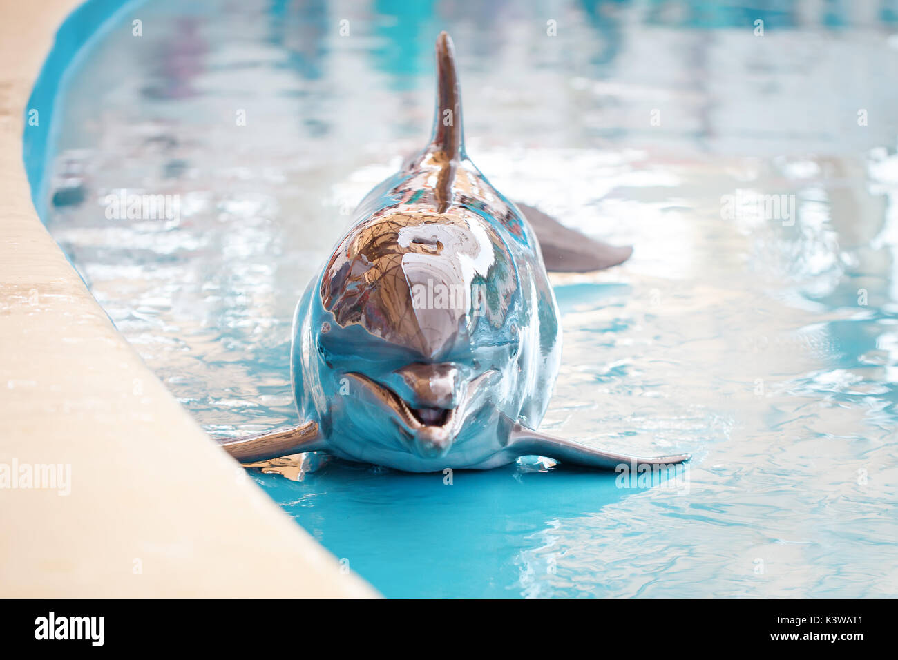 A young Dolphin is smiling and playing in the pool. - Stock Image