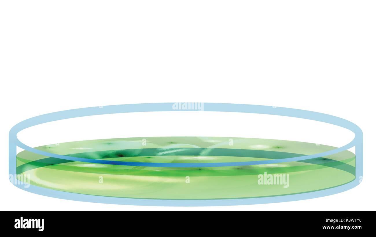 Petri Dish with Bacteria, Colony - Vector Illustration - Stock Vector