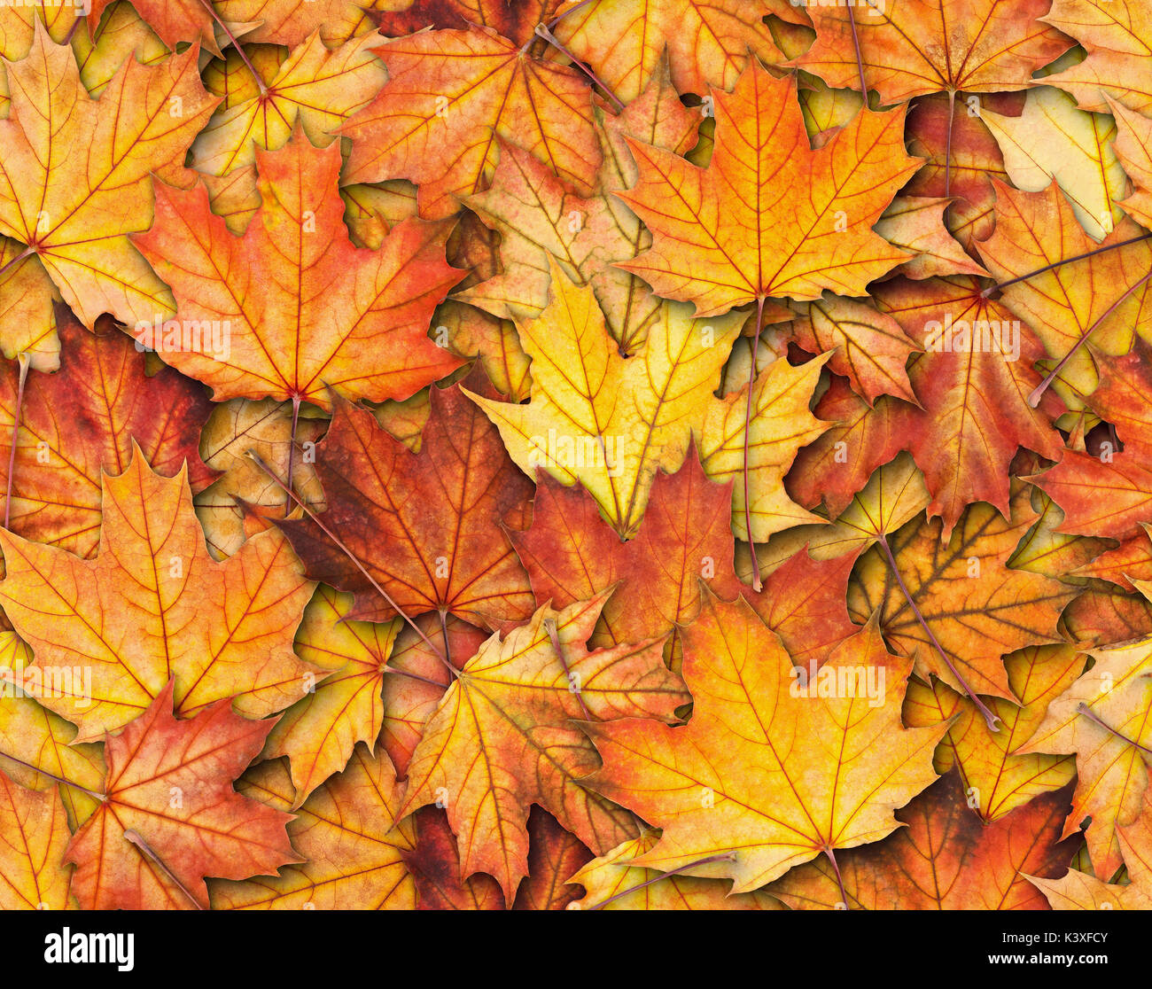 Seamless texture with maple leaves - Stock Image
