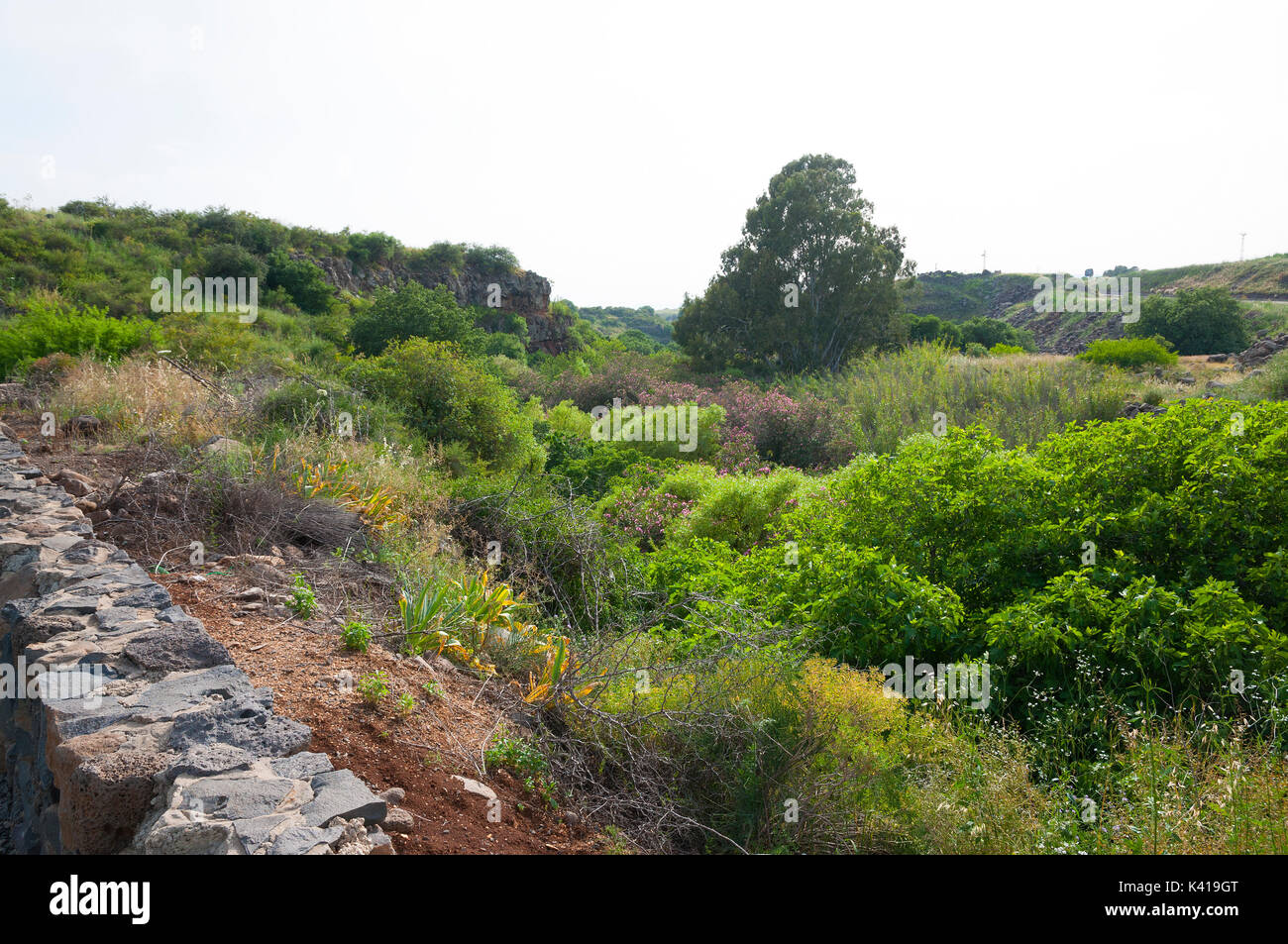 Zavit stream, Eitan stream - Stock Image