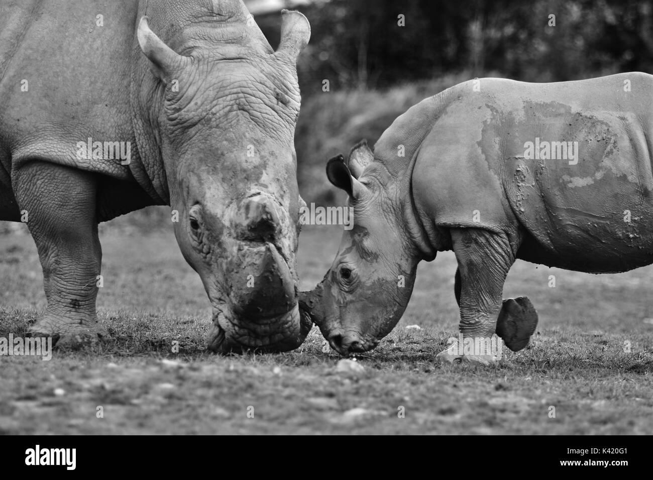 zoo animals - Stock Image