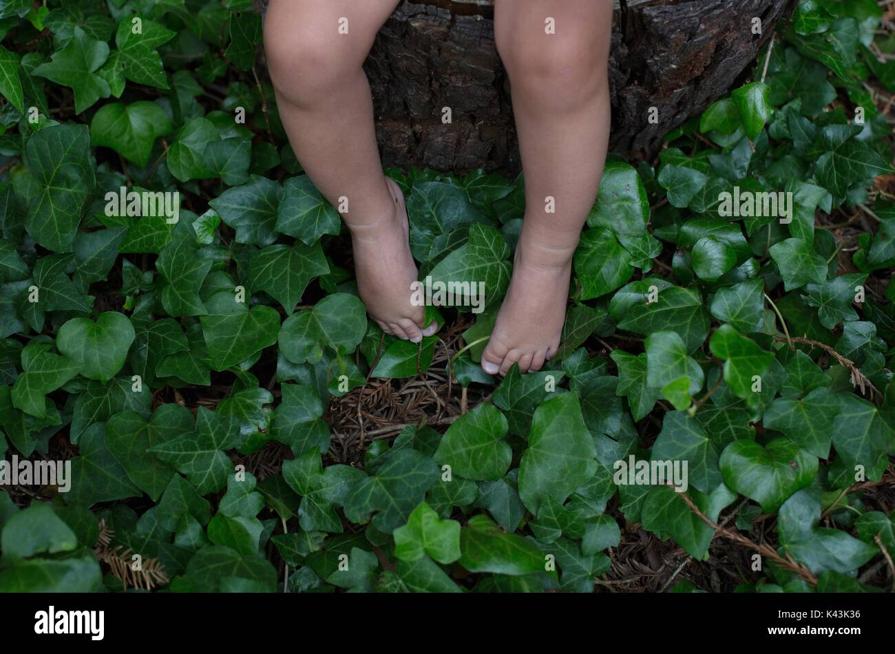 The feet of a small child on an ivy covered forest floor. - Stock Image